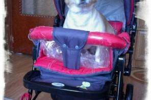 Bebelușul și câinele: minighid de conviețuire
