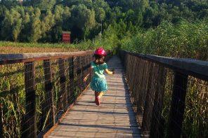 În pădure la Comana